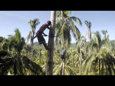 The Life of a Coconut Farmer in the Philippines